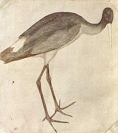 Stork - Pisanello (c. 1395 – c. 1455)