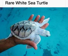 Animals And Pets, Cute Animals, Turtle Time, Save Our Oceans, Marine Conservation, Green Turtle, Underwater Photography, Marine Life, Under The Sea