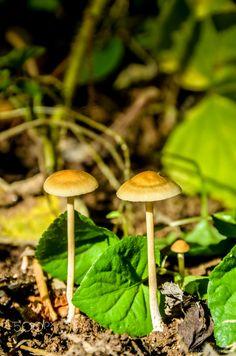 Micro mushrooms, by António Mendoça