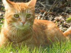 terecht terug thuis half 04 Bijou #VERMIST #kater te #Duffel (Antw) sinds 29/03/2014 http://gevondenenvermistehuisdieren.be/index.php?item=view_class&id=10374  Buurt/wijk: Park Duffel   Bijou Rosse gecastreerde kater. 5 jaar. bange kat, durft aanvallen.. Volledig ros, pootjes iets lichtere kleur, enkel rond zijn mondje en ogen is hij wit. Draagt geen bandje contact: Sofie Weyne Email: sofieweyne@hotmail.com Telefoonnummer: 015 32 12 50  Mobiele ...