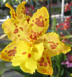 Orchids, Live, Blooming Plants