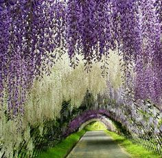 Wisteria and lilac.