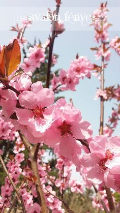 Pink flowers https://www.facebook.com/AvalonFenye/