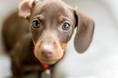 oh my god. this site has every dachshund you could think of.