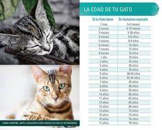 La edad de tu gato