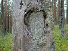 Paganism, Folklore, Food Pictures, Finland, Mythology, Trees, Traditional, History, Google Search