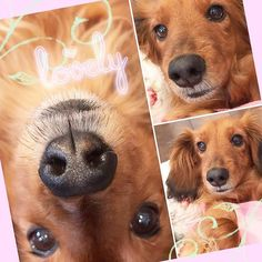 . おはようございま〜す(ᵔᴥᵔ) . . ☀️さっ❣️ベルちゃんも起きようか❣️ . 我が家のbabyちゃん😘 . 今日も暑くなりそうだよ❣️ . . ハイ!今日も親バカです😆 . . . *・゜゚・*:.。..。.:*・'(*゚▽゚*)'・*:.。. .。.:*・゜゚・* . #ダックスフンド #ミニチュアダックスフンド  #baby#lovely #dog #ベルちゃん#愛犬 #可愛いワンコ #癒しわんこ #いぬのいる生活  #いぬすたぐらむ #早起き#今日もあつい  #病気で闘ってるみんなに元気玉