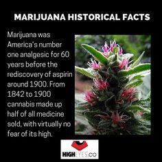 #marijuana #cannabis #fact