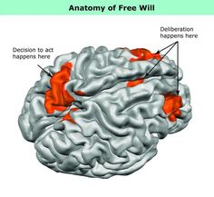 """What """"Free Will"""" Looks Like in the Brain"""