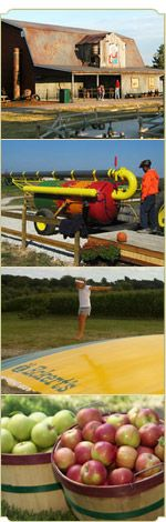 Eckert's Millstadt Farm is only open in the fall. Bring the family and enjoy hayrides, jumping pillows, pig races and more! #familyfun
