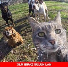 The puurrfect selfie: Cat appears to take picture with his canine pals Wtf Funny, Funny Cute, Rap Cap, Fowl Language Comics, Funny Images, Funny Pictures, Ridiculous Pictures, Comedy Pictures, One Green Planet