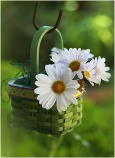 lovely little daisy basket Daisy Love, Daisy Daisy, Daisy Flowers, White Flowers, Good Morning Quotes, Morning Sayings, Morning Messages, Morning Images, Ikebana