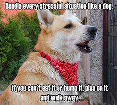 Columbus Funny Pictures PM, Tuesday May 2016 PDT) – 63 pics andrew raynor new hampshire Funny Animal Pictures, Dog Pictures, Funny Images, Best Funny Pictures, Funny Animals, Cute Animals, Animal Pics, Baby Animals, Dump A Day