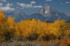 Memories:  I grew up in Idaho & loved the Tetons: Grand Tetons, Wyoming in fall color.  Photo Credit: Donated by Kecia Weigand