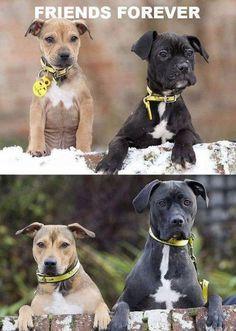 True Friends (dogs,puppies,cute pictures,friendship,friends,animals)