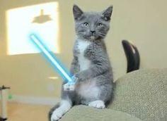 Jedi Kittens