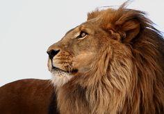 Portrait of a King by V. Mason
