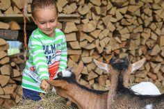 Ferien auf dem Bauernhof, das tollste Erlebnis für jedes Kind 💚 #urlaubaufdembauernhof #ferienaufdembauernhof #hagerhof #walchsee #tierliebe Goats, Animals, Holiday On A Farm, Kids, Animales, Animaux, Goat, Animal, Animais
