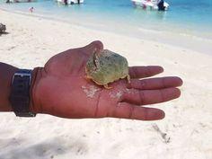 #mauritius#paradiseisland#paradies#paradise#beautiful#amazing#amazingview#sky#bluesky#skyporn#sea#seaporn#bluesea#seaview#nature#naturelove#naturebeauty#naturepic#beach#beachtime#picoftheday#instadaily#instalike#instagood#sunnyday#goodtime#inlove#krebs#crab