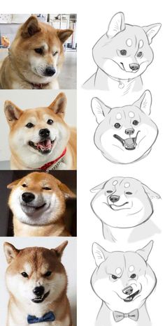 How to draw corgi dog expressions in a cartoony illustration style