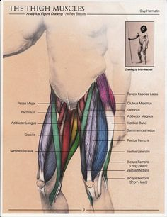For starters, various training your dog facilities and schools have opened today, making the training process more accessible, plus much more plus muc. Leg Anatomy, Human Body Anatomy, Human Anatomy And Physiology, Muscle Anatomy, Anatomy Study, Anatomy Reference, Medicine Student, Medical Anatomy, Massage Therapy