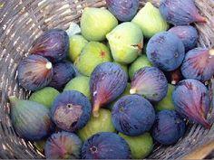 Higos y brevas. La higuera es un árbol típico de los países mediterráneos. Las higueras comunes solo dan una cosecha de higos e ago-sept-oct  Las higueras breveras ademas de dan una cosecha de brevas