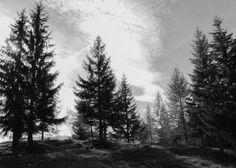 Zeitgefluester Art Print by Julia Aufschnaiter - X-Small Forest Forearm Tattoo, Forest Tattoos, Landscape Silhouette, Tree Silhouette, Landscape Pencil Drawings, Skull Sleeve Tattoos, Jungle Tree, Wood Burning Art, Mountain Tattoo