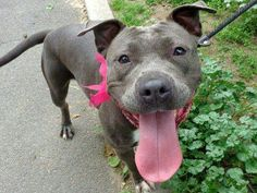 Manhattan NY.  Sassy.  Female.  3 yrs.  Dies in a.m.  See Urgent Part 2 on fb.***KILLED***