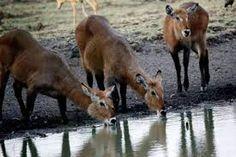 Kangaroo, Moose, Animals, Elk, Animales, Animaux, Animal, Kangaroos, Animais