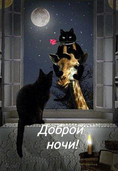 Cats, Animals, Witches, Good Night, Good Morning, Gatos, Animales, Animaux, Animais