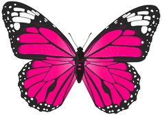 Pink Butterfly PNG Transparent Clip Art Image