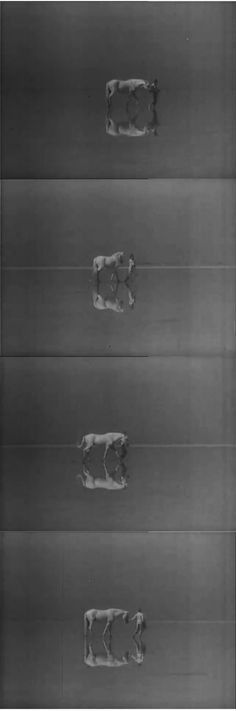 Albert Lamorisse: Le crin blanc (1953) Film stills