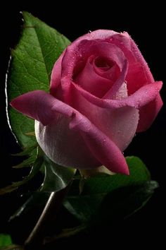 Flowers -beautiful buildings-landscapes-anything that catches. Beautiful Flowers Wallpapers, Beautiful Pink Roses, Pretty Flowers, Gif Kunst, Rosa Rose, Rose Pictures, Rose Wallpaper, Flowers Nature, Rose Buds