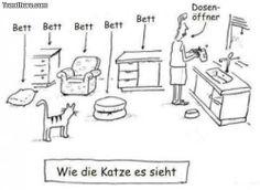 Wie die Katzen die Welt sehen