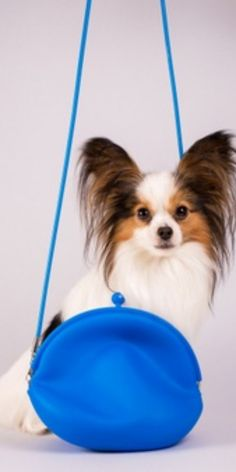 When it comes to adopting a pet, we all know that the Cutest Dog Breeds are on the top of this list. #breedingdogs #cooldogbreeds #differentdogbreeds #cutestdogbreeds #petdogsbreeds #dogbreedsmix #breedsofdogs #dogsandpuppies #cutedogs Cute Dogs Breeds, Dog Breeds, Different Dogs, Funny Animal Videos, I Love Dogs, Small Dogs, Funny Dogs, Dachshund, Pet Adoption