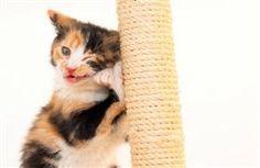 Be a better pet parent to your cat! Click through to check out this Pet-ternal Instincts Blog to find out more how!