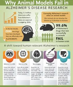 Research infographic was applied here because all the researched data for the Alzheimer's Disease Research are put together in an amazing, aesthetically pleasing form for the world to see. Timeline Infographic, Infographics, Animal Fails, Sensitive People, Medical Research, Alzheimers, Pet Care, Drugs, Animal Testing