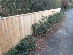 Larch fencing not treated so that a stain and oil can be applied. This is one of the enduring softwoods and looks great even untreated. Installed by Mason Stowood Landscapes Ltd