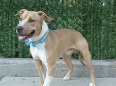 *MURDERED, MURDERED - WATCH HIS VIDEO AND SEE HOW ADOPTABLE HE WAS - *  SMORES1_A1085472