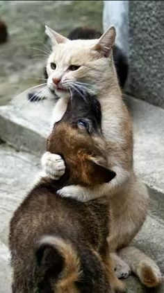 ●•●•●•●•●•● Animals ●•●•●•●•●•●  help me  you're hugging to hard