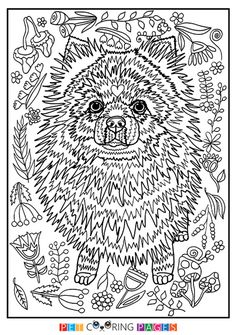 Free printable Pomeranian coloring page available for download. Simple and detailed versions for adults and kids.