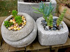 Shell mulch on succulents | Flickr - Photo Sharing!
