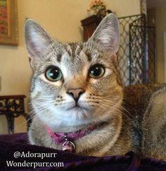Always Adorapurr | It's a Wonderpurr Life