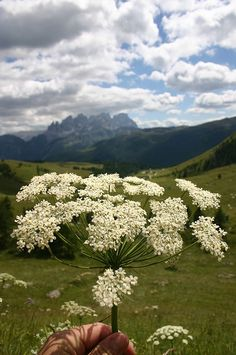 Dolomiti- Passo di San Pellegnino Soraga Italy