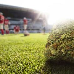 How Much Weed Could an NFL Team Buy… - http://houseofcobraa.com/2017/02/10/60669/