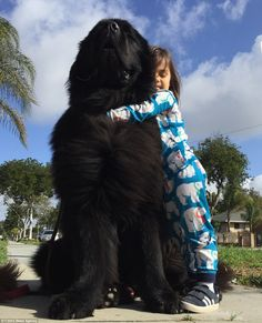 How a family& three children became buddies with their two giant dogs Joshua and Bee Fisher, from California, decided to get two Newfoundlands, which can weigh up to The dogs are bear-like and their three young kids love playing with them. Dogs And Kids, Animals For Kids, Cute Baby Animals, Huge Dogs, Giant Dogs, Cute Puppies, Dogs And Puppies, Corgi Puppies, Pet Dogs