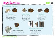 Nut Hunting