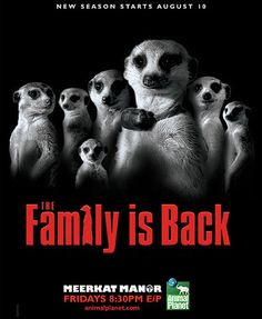 Meerkat Manor is a British television programme produced by Oxford Scientific Films for Animal Planet International that premiered in September 2005 and ran for four series until its cancellation in August 2008