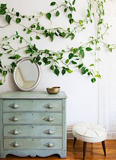 Free form houseplant: Vines trained to meander around windows or up walls imitate art reliefs and seemingly let the outside creep in. Click or tap for more fresh ideas for houseplants from Tara Heibel, co-owner of Chicago's home and garden shop Sprout Home and co-author of Rooted in Design. (Photography © 2015 by Ramsay de Give and Maria Lawson.)