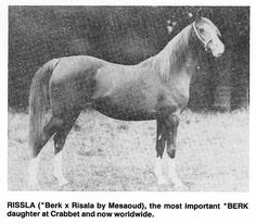 Photo: RISSLA (*Berk x Risala, by Mesaoud) 1917 chestnut mare | Arabian Album: Crabbet Arabian Horses | Hypoint | Fotki.com, photo and video sharing made easy.